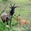 Tour to Uganda National Parks -  Uganda Safari Experts