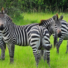 Tour to Uganda Safari -  Uganda Safari Experts