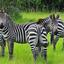 Tour to Uganda Safari -  Uganda Safari Experts