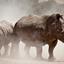 Wildlife Safaris in Uganda -  Uganda Safari Experts