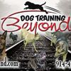 dog training poughkeepsie - Dog Training Beyond, LLC