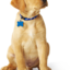hidden pet fence - Canine Company
