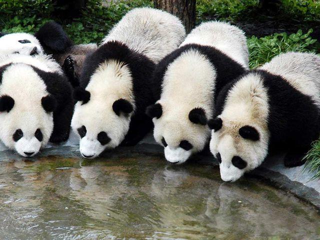 zhangjiajie-index China Travel Tours