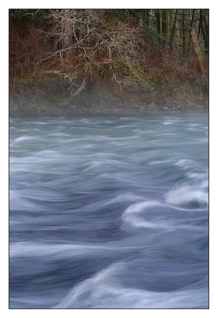 Puntledge Park 2015 01 Nature Images