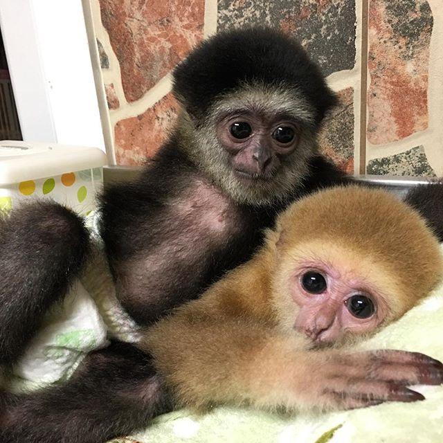 12357822 934256496653753 1766266297 n Zoological Wildlife Foundation