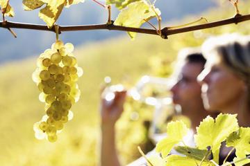 rhone-valley-wine-tour-from-avignon-chateauneuf-du Janasse's Terre D'Argile