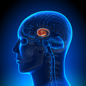 article codev-2014-05-18-bae683f4c9-shutterstock 1 The Power of the Adolescent Brain