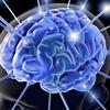 A Brief Description Of Your Brain