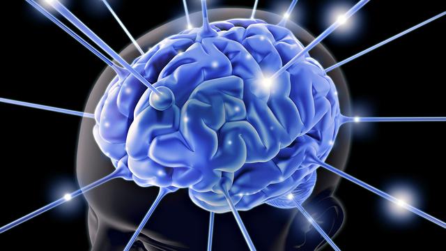19069-desktop-wallpapers-brain A Brief Description Of Your Brain