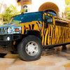 Tiger Stripe Hummer - Picture Box
