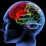 brain4  The Brain Enhancement That Is Pure