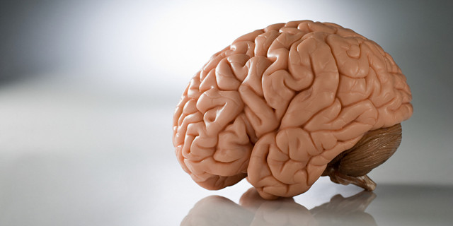 Nuts And Brain Functions Picture Box