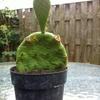 image - Cactus
