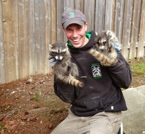 SWAT Derick raccoon removal Raccoon Removal Toronto