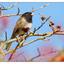 2016 Backyard Bird 1 - Wildlife