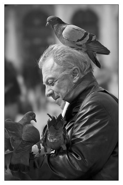 Pidgeon Man B&W Venice & Burano
