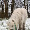 sneeuw7b - balingehofforum