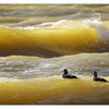 Yellow Waves - Wildlife