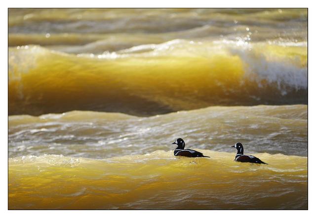Yellow Waves Wildlife