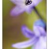 Backyard flower 2016 1 - Close-Up Photography