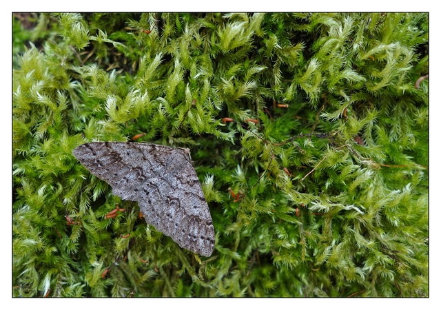 Moth in Moss 2016 Close-Up Photography
