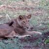 Budget Camping Safari in Ta... - Amani Tours & Travel Ltd