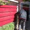 Tuin - Schutting tegen schu... - In de tuin 2016