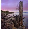 Union Bay 2016 01b - Landscapes