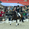 k7 - Iberische Paard-dag