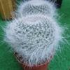 IMG 20160605 183333 - cactussen2016
