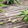 Autoflowering Cannabis Seeds - Picture Box