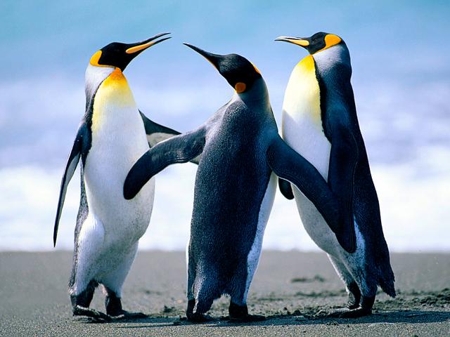 Penguins Picture Box