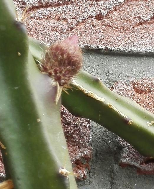 IMG 20160612 185522 cactussen2016