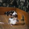 rodent-control-Los-Angeles-CA - Top Pest Control of Los Ang...