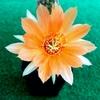 IMG 20160614 182217 - cactussen2016