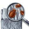 bed-bug-exterminator-Los-An... - A Plus Pest Control of Los ...