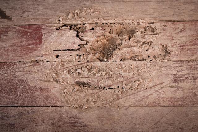 termite-control-Los-Angeles-CA A Plus Pest Control of Los Angeles