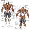 bodybuilding-exercises-for-... - http://rippedrxno2blastcanada