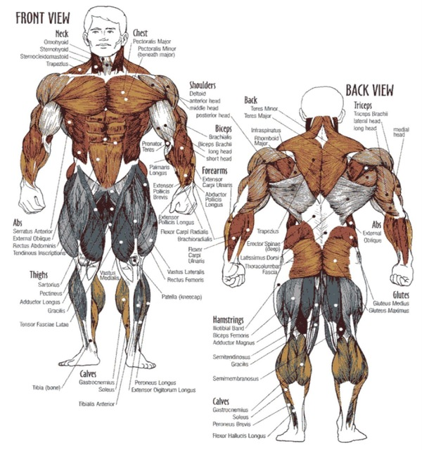 bodybuilding-exercises-for-menexercises-bodybuildi http://rippedrxno2blastcanada.com/alpha-fuel-testo/
