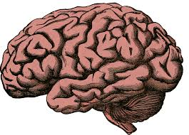 The brain on a constant supply of oxygen, but vari Picture Box