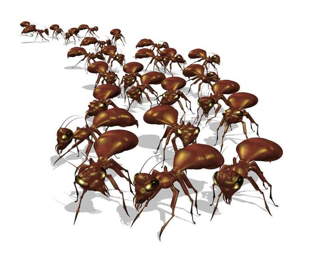 ant-removal-Los-Angeles-CA Pest Control of Los Angeles