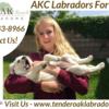 California's Top English La... - Tender Oak Ranch Labradors ...