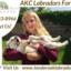 California's Top English La... - Tender Oak Ranch Labradors For Sale