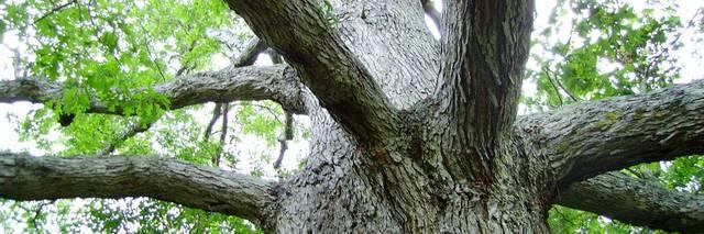 Dallas-Tree-Service Picture Box