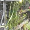 IMG 20160702 125647 - cactussen2016