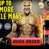 footer-2 -  X Alpha Muscle
