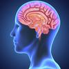 brain-barrier - http://www.trysupercbdreview