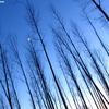 maan1 - Nature calls