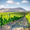 Half Day Winelands Tour - Picture Box