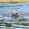 plukkie zwemmen1 - balingehofforum